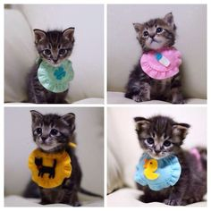 Kittens with bibs. --- OMG!!! This is the cutest thing that I have ever seen!!!