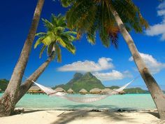 hammock on a tropical beach. . . i need this gahhh please