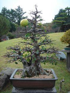 Pear bonsai by stone sculpture, via Flickr