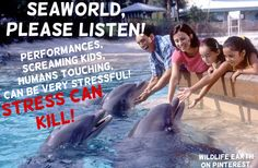 SeaWorld, please listen! Performances, screaming kids, and humans touching can be EXTREMELY stressful to dolphins! STRESS CAN KILL! If SeaWorld rescues dolphins, then why are they forcing them to do all these stressful things? For profit? Wildlife Earth on Pinterest fighting for marine wildlife rights!