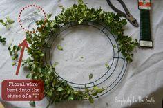 How to make a boxwood wreath.