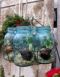 mason jars in an old canner rack - forcing bulbs here, but terrariums would work, too
