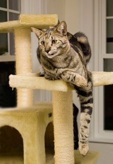 How Can I Teach My Cat to Love Her Cat Tree?