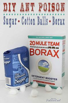 Ant Poison DIY. 1/3 cup sugar, tablespoon borax, 1 cup warm water. Mixed to dissolve. Soak a cotton ball in the mixture and art out for ants.