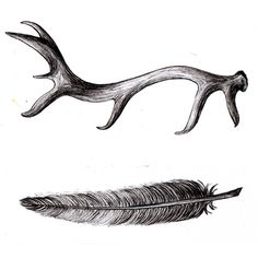 antler, feather, illustration by hellojenuine on flickr #antler #feather #illustration
