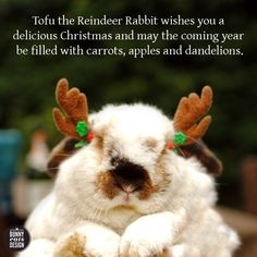 Tofu the Reindeer Rabbit