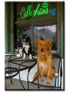 Go to Callaghan's!  Voted Best Burger in Alabama, and they are dog friendly