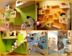 Your furry friends will love this changeable modular cat climbing wall. http://theownerbuildernetwork.co/nofx