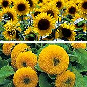 High Heat Tolerant Flowers For Hot Summer Areas
