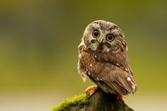 H-owl are you? (;