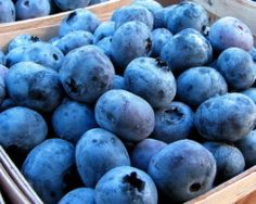 Pick-Your-Own Blueberries at Miller's Blueberry Farm in Watkinsville, Ga. Photo by Kristi Palmer.
