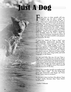 anim, dogs, stuff, pet, true