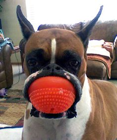 Silly boxer