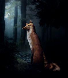 wolfs....