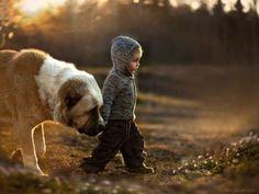 farm, animals, mothers, friends, pet, children, kids, little boys, big dogs