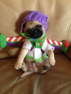 puggi, costumes, anim, heart, pet, pug lightyear, dog, bah humpug, eyes