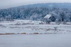 Cold Blue Snow surro
