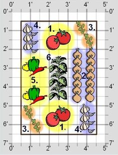 plant, garden design, yard, standard salsa, salsa garden