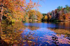 Fall color at Bass Pond on the Biltmore Estate in Asheville biltmor estat, ashevillenorth carolina, biltmore estate, fall color