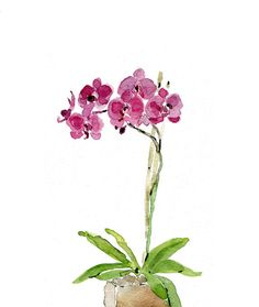 Orchid plant art print of watercolor painting by TheJoyofColor, $21.00