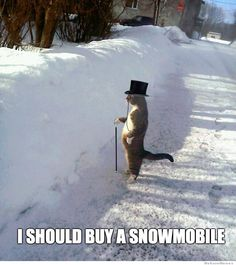 i should buy a snowmobile cat