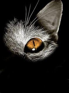 Great macro http://bit.ly/GZdCEe anim, cat eyes, felin, black cats, art, chat, kitti, kitty, photographi