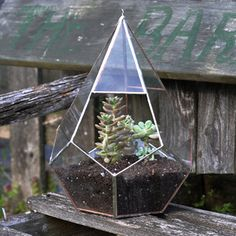 @Kati Driscoll You should check out ABJ Glassworks at DCCA's Alternatives Holiday Craft Show during the Art Loop on Friday, Dec. 7 She makes terrarium cubes.  So cool!