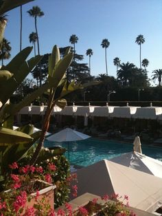 I Love L.A.   Beverly Hills Hotel Pool   Photo by Paloma Contreras for #LaDolceVita