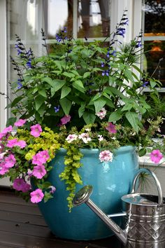 Black and Blue Salvia, Wave Petunias, Annual Verbena, Creeping Jenny and a cool grass in the background in this sun combo pot!  Such a pretty combo of plants ... in a gorgeous turquoise container. potted plants patio, patio pots plants, patio plants in pots, petunia, beauti planter, garden