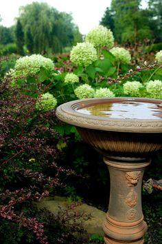 "hydrangea ""annabelle"" w/ bird bath"
