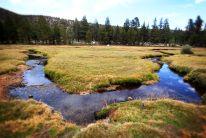 Golden Trout Wilderness