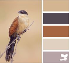 ✮ Feathered Tones