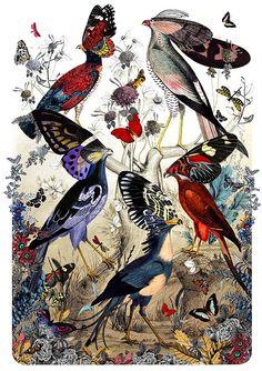 butterfli, bird, william, fimm fuglar, art, inspir, kristjana, print, illustr
