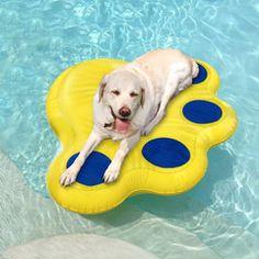 Ponction Chien preuve flotteur piscine 55$