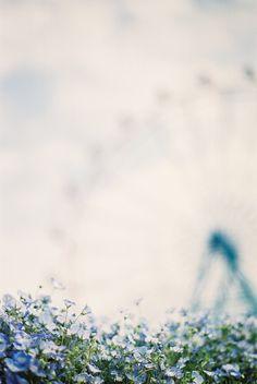 field, dream, blue, inspir, beauti, blur, pocki poki, flower, photographi