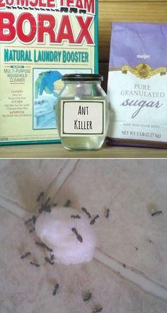 water, baby powder, ant killer, cotton, balls