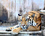 Best zoos in Asia