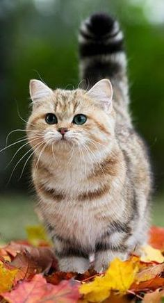 a really beautiful cat and great photo