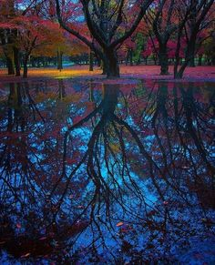 Reflection, Tokyo, Japan photo via breann
