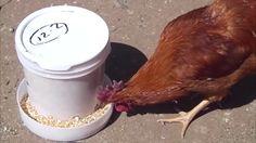 Fantastic free chicken feeder