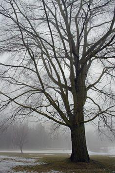 Bare tree...