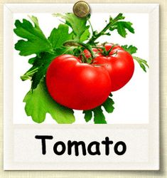 Tomato growing tips.