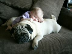 i LOVE pugs!! (and babies!) lol.
