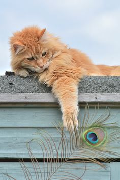 I Can Catch It #felines #cats #kittens #pets #animals