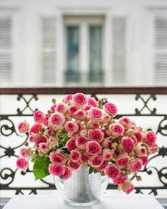 pink roses, flower