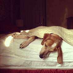 Maddie Under a Blanket.