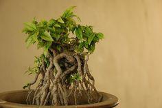 Assignment Bonsai #bonsai #gardening