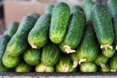 How many ways can you serve a cucumber? | Stretcher.com