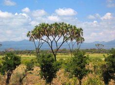 Meru wilderness- Nairobi, Kenya