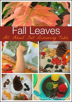 Fall Activity Discovery Table And All About Changing Leaves